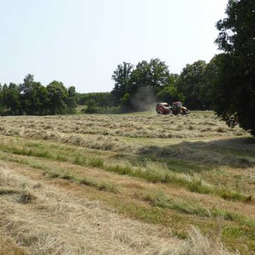 Baling hay with a Welger big baler