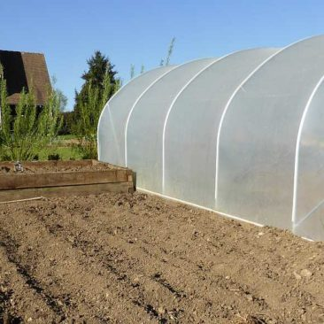 The potato and asparagus bed next to the polytunnel