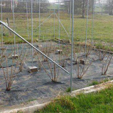 weeded fruitcage