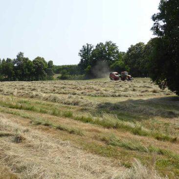 Baling hay with a Welger big baler