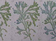 Three seaweed
