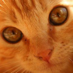 New kitty Gina